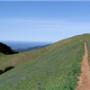 Tamalpa Headlands 50K