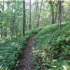A fern lined section of trail